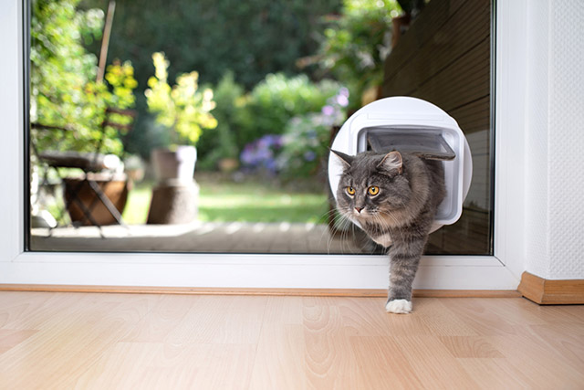 Pet Doors & Entry Systems