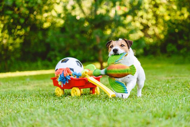 Pet Games & Toys